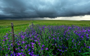Picture field, landscape, flowers, clouds, the fence