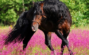 Picture flowers, nature, horse, dance