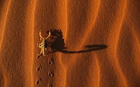 Picture Sand, Traces, Shadow, Scorpio