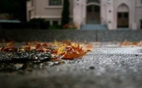 Picture autumn, asphalt, leaves, macro, puddle, fallen