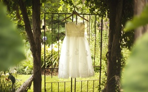 Picture trees, white, dress, wedding