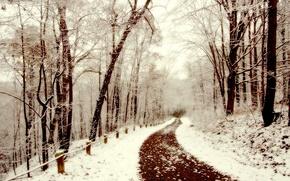Picture winter, snow, walk, path