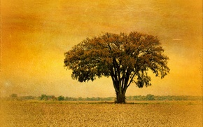 Picture style, background, tree