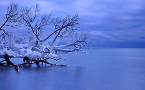 Wallpaper ice, winter, icicles, Canada, Whitby, lake Ontario, fallen tree