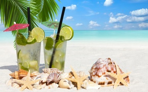 Picture sea, beach, Palma, lime, shell, starfish, beach, sea, lime, shells, starfish, total, palm, total