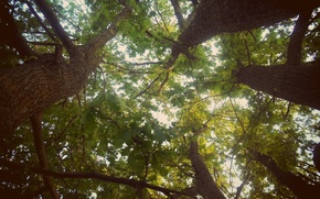 Picture the sky, trees, green, foliage, crown