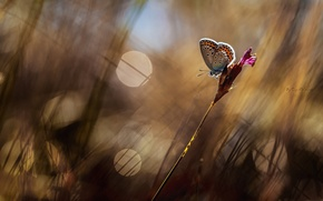 Picture grass, macro, glare, butterfly, razmytost