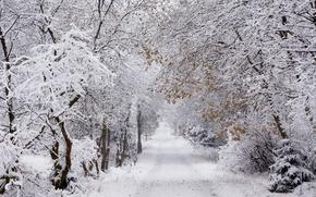 Wallpaper Winter, The upper Harz, 5° minus