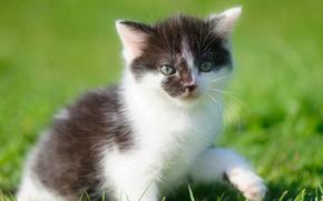 Wallpaper bokeh, foot, baby, kitty