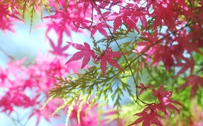Wallpaper leaves, branches, pink