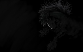 Picture freedom, night, horse, the wind