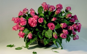 Picture flower, love, flowers, nature, holiday, rose, feelings, roses, beauty, bouquet, petals, beautiful, pink, buds, beautiful, …