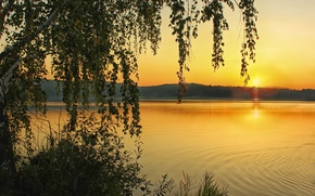 Picture sunset, river, birch