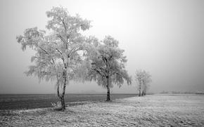 Wallpaper road, trees, winter