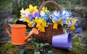 Picture basket, spring, lake, primrose, Krokus, snowdrop, Narcissus, bucket