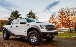 Picture machine, the sky, trees, Ford, sky, F-150, SVT Raptor, Roush