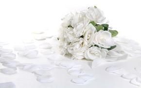 Picture Rose, White, Bouquet, Petals