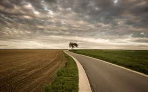 Picture road, field, tree, storm, gray clouds