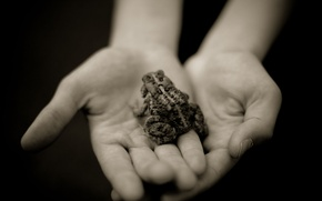 Picture grey, hands, image, Frog