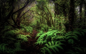Picture forest, leaves, trees, thickets, fern, path