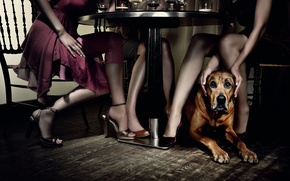 Picture girls, dog, Table, restaurant