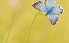 Wallpaper yellow, background, butterfly, blue, grass