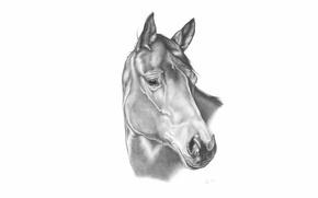 Picture horse, horse, figure, pencil