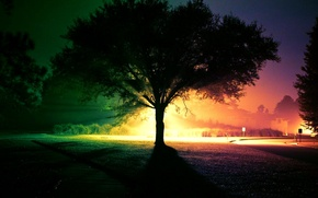 Picture light, night, tree, paint