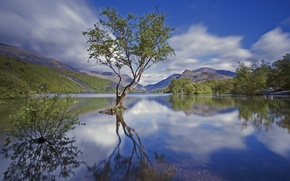 Picture mountains, lake, tree, England, national Park, Snowdonia, North Wales