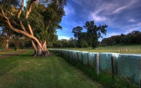 Wallpaper Trees, Fence, Meadow