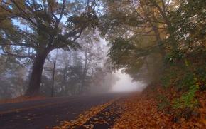 Picture road, autumn, leaves, trees, Kentucky, Kentucky, Park Virgin, Covington, Covington, Devou Park