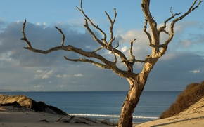 Wallpaper New Zealand, tree, Sands