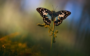 Picture summer, macro, background, butterfly, glade, plant, Wallpaper from lolita777