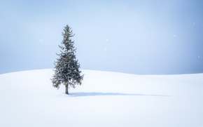 Picture snow, tree, shadow, snow, tree, shadow, snowing