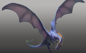 Picture blue, dragon, wings, claws, flight, grey background