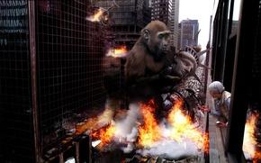 Wallpaper destruction, 157, monkey, the city