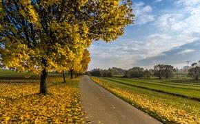 Wallpaper tree, road, autumn