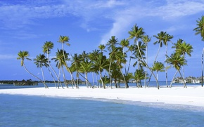 Picture Sand, Island, Palm trees