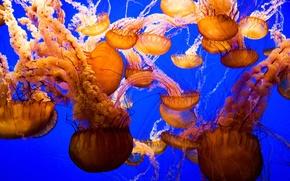 Wallpaper jellyfish, the world, underwater
