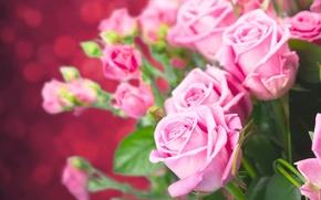 Wallpaper roses, bouquet, buds