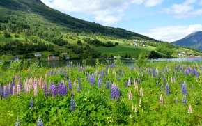 Picture greens, flowers, mountains, river, home, meadow, Norway, Lupin