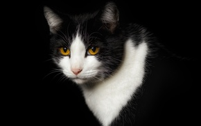 Picture eyes, cat, face, black background, yellow eyes, Wallpaper from lolita777, expressive, cat. black and white