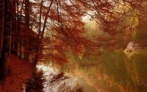 Wallpaper autumn, trees, lake