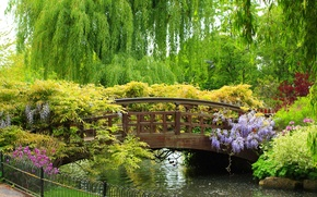 Wallpaper trees, flowers, Park, beauty, plants, fence, river, the bridge, bridge, beautiful, IVA, Spring garden, weeping