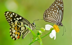 Picture flower, pattern, butterfly, wings, pair, moth