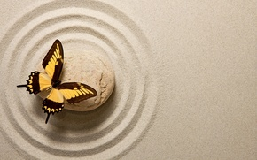 Picture sand, butterfly, stone, butterfly, sand, oriental, zen