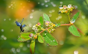 Picture leaves, drops, Rosa, glare, plant, branch, dragonfly, fruit