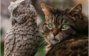 Picture cat, cat, owl, muzzle, green eyes