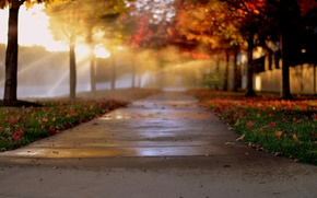 Picture autumn, light, trees, the city, foliage, alley, alley, bokeh