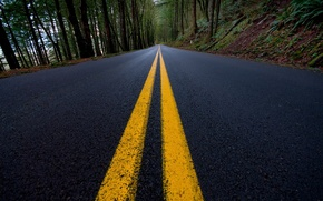 Wallpaper markup, lines, 156, forest, road